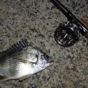 【釣り】南港へち釣行 (2020/09/03 南港ヘチ釣り 真チヌ 41㎝ キビレチヌ 37cm~釣果有り)