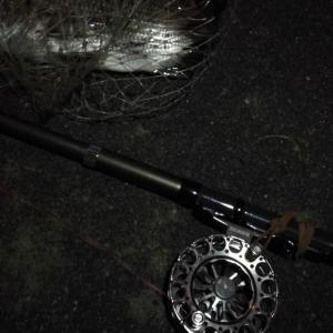 【釣り】南港へち釣行 (2020/11/28 南港ヘチ釣り 真チヌ33㎝ キビレチヌ45.5㎝ 釣果有り)