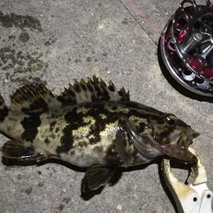 【釣り】南港へち釣行 (2020/12/05 南港ヘチ釣り  キビレチヌ41㎝ ガシラ25㎝ タケノコ 釣果有り)