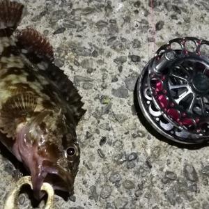 【釣り】南港へち釣行 (2020/12/08 風の強い日の南港ヘチ釣り  キビレチヌ40㎝ ガシラ 釣果有り)