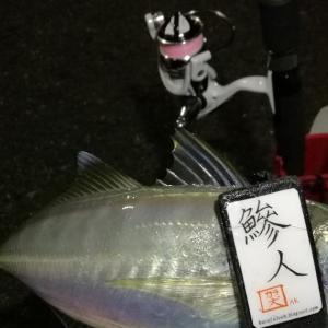 【釣り】南港釣行 (2020/12/10 南港アジング 絶好釣果!アジング釣果 中アジ~(28㎝~) 釣果有り)