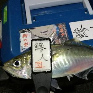 【釣り】南港釣行 (2020/12/11 南港アジング 続、絶好釣果!アジング釣果 中アジ~(29㎝~) 釣果有り)