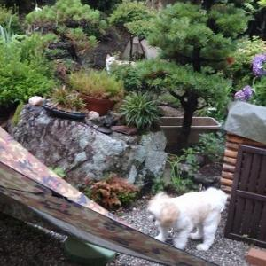今朝も雨。ソラの迷走。