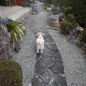 ソラは吠える犬、しつこい犬が苦手になって来た。
