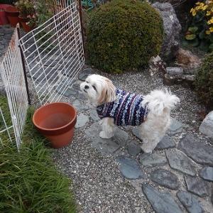 最近のソラは元気過ぎ。朝の散歩がしんどくなってきた。