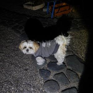 たまにある真夜中の散歩。