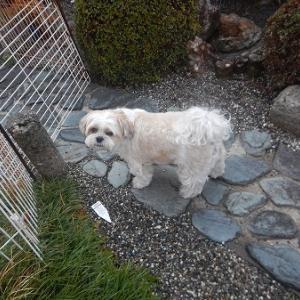 ソラはパパ思いのキャンプ犬。