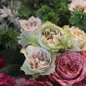 堀木さんのバラ