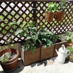 かわいく野菜を育てたい!家庭菜園をおしゃれに演出する方法
