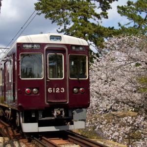 夙川公園苦楽園口 桜と阪急電車(1)