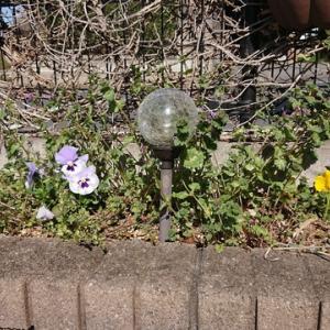 庭の草取りとトレニアの種まき!