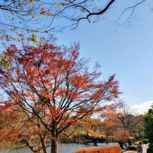 街はオレンジ色に···( ゚∀゚)(^^)d