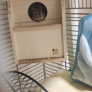 シマリスまろんとお気に入りの巣箱