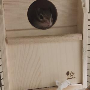 シマリスまろんと巣箱とベッド
