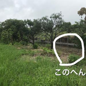 【畑】腐葉土ボックス作り開始 〜思い込みってあるよね!〜