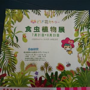 とちぎ花センターで開催されている食中植物展に行ってきました
