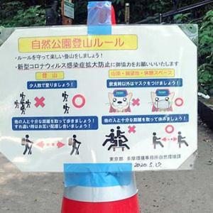 急遽割り込み入稿で6月3日の高尾山登山報告です😎