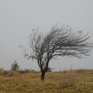 晩秋の霧ヶ峰(八島湿原・ゼブラ山)2019年10月21日(月)