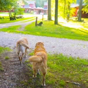 神社にお参りする時に犬などのペットを連れて行ったらダメ?