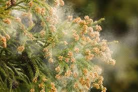 花粉には勝てません…