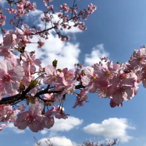 春が来た〜♪コートはウールからトレンチへ。