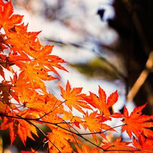 秋は日帰りで行楽へ!写真映え間違いなしな関西おでかけスポット5選