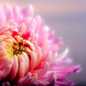 今日は「重陽の節句」です。不老長寿や健康を願い菊や初秋の食材を食べましょう。
