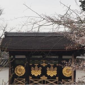 にしさんの花日記 醍醐寺の桜