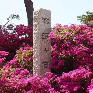 にしさんの花日記 満開のつつじ 昨年(2019)の館林つつじヶ岡公園の画像より