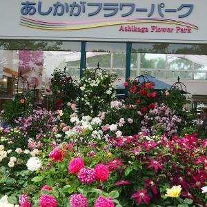 にしさんの花日記 ばら 足利フラワーパーク