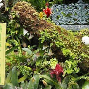 にしさんの花日記 伊豆熱川 ワニバナナ園