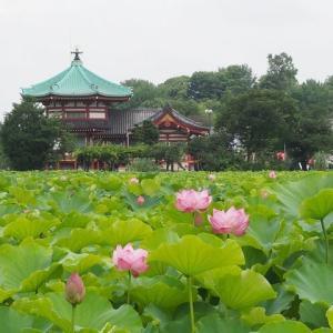 にしさんの花日記 上野 不忍池周辺 梅雨の花々