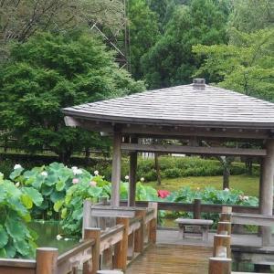 にしさんの花日記 蓮 福井県 南越前町 花はす公園