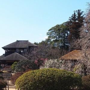 にしさんの花日記 梅の春 水戸 偕楽園