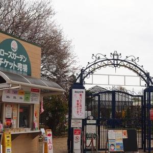 にしさんの花日記 春先の京成バラ園