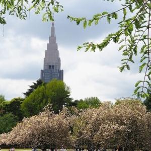 にしさんの花日記 東京 新宿御苑の八重桜