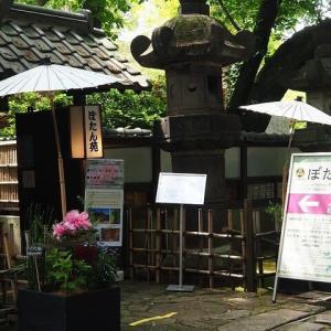 にしさんの花日記 上野東照宮付属 ぼたん苑