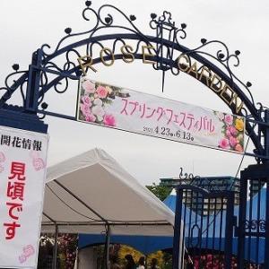にしさんの花日記 春バラ