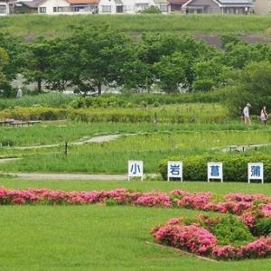 にしさんの花日記 花菖蒲 東京 小岩菖蒲園