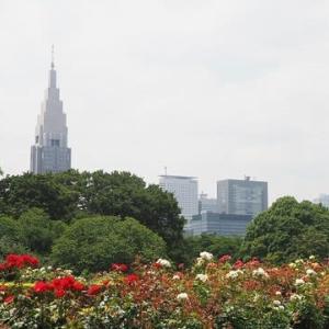 にしさんの花日記 新宿御苑のバラ花壇