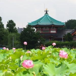 にしさんの花日記 蓮 紫陽花