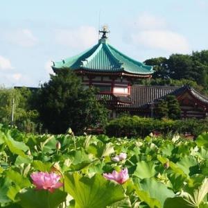 にしさんの花日記 東京上野公園 不忍池 蓮の花の見頃が続いています