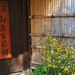 東京 向島百花園その4 秋の花々