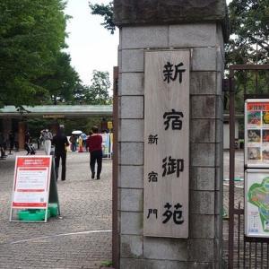 にしさんの花日記 新宿御苑 十月桜