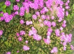 【色弱あるある】紫の花と思っていたらピンクと言われた事件