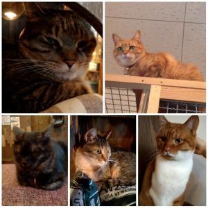 人生初の猫カフェで、猫アレルギー発覚!!!!!