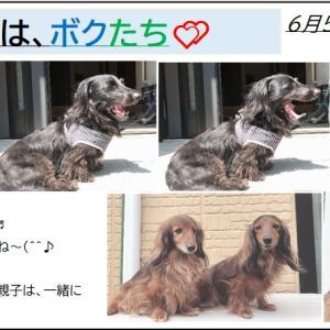 6/5【ダックス】今日のパチリ!