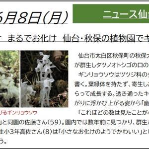 6/8【ギョウリンソウ】仙台市秋保大滝植物園(仙台市太白区)