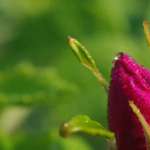 セラピーに植物が介在することの意味①
