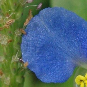 セラピーに植物が介在することの意味②Plant Medicine
